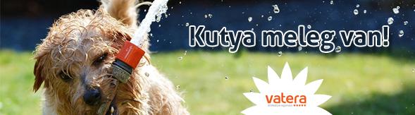 blog_kutya